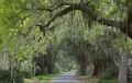 Freedom & Tradition: M.E. Bradford's Southern Patrimony